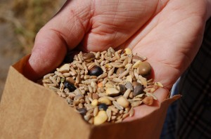 mix of legumes and grain for planting