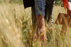collecting legumes undersown with wheat, Tajikistan
