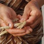 armenian farmer holding marginal wheat