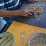 threshing wheat, institute of botany, armenia